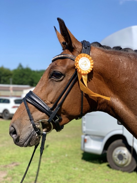FELIPA gewinnt die Dressurpferde M in Ganderkesee